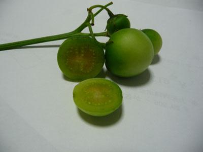 ジャガイモの実.jpg