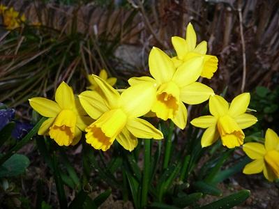 春の花5.jpg