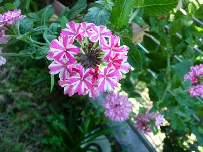 梅雨時の花.jpg