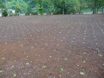 芝植え2.jpg