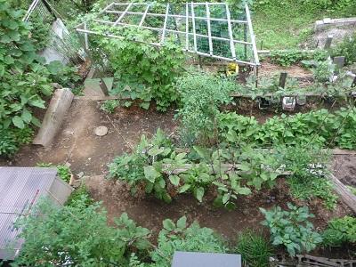 菜園5.jpg