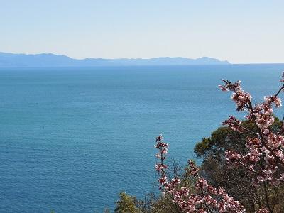 駿河湾の桜.jpg
