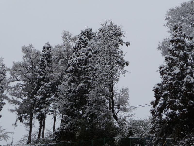雪の木.jpg