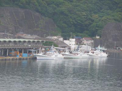 雨の勝浦港.jpg