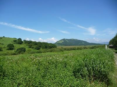八島原湿原.jpg