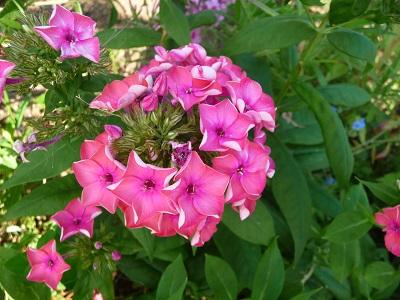 宝勝寺の花たちⅡ.jpg
