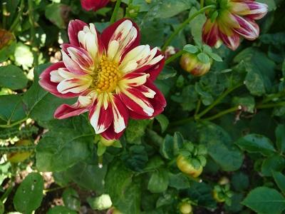 宝勝寺の花たちⅢ.jpg
