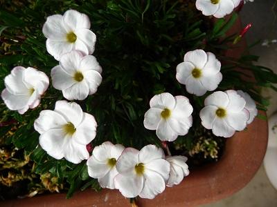 我が家の花たちⅡ.jpg