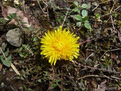 春の花たち.jpg