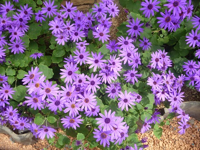 花の都1.jpg