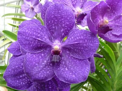 花の都3.jpg
